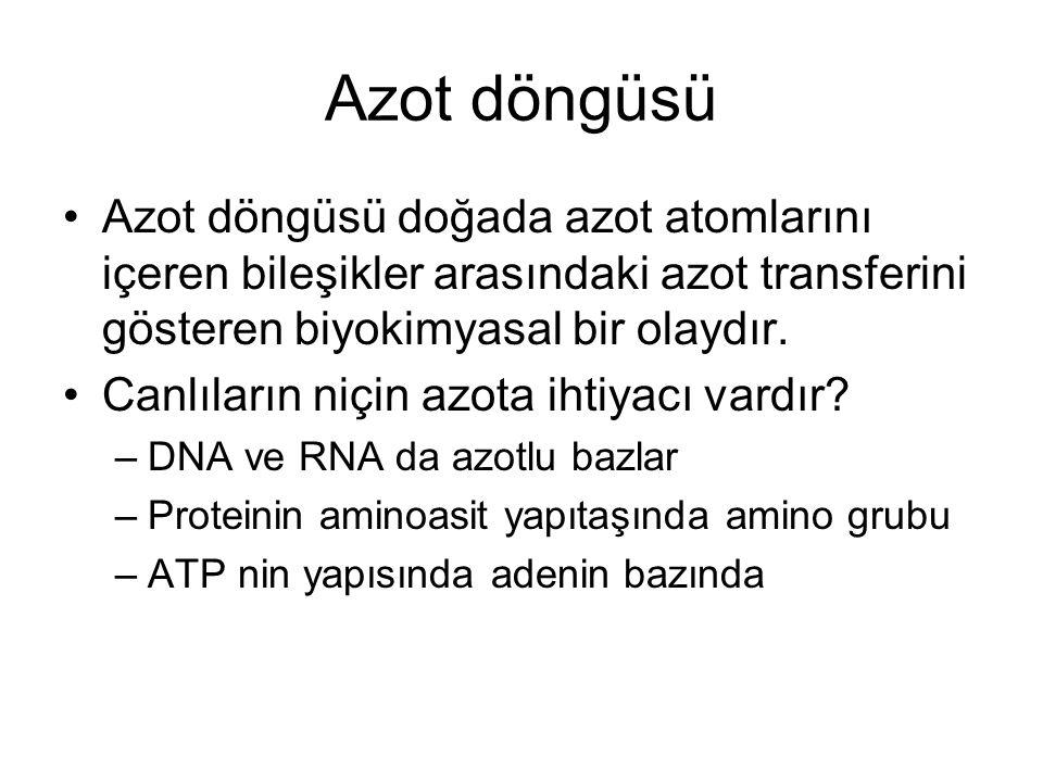 Azot döngüsü Azot döngüsü doğada azot atomlarını içeren bileşikler arasındaki azot transferini gösteren biyokimyasal bir olaydır. Canlıların niçin azo
