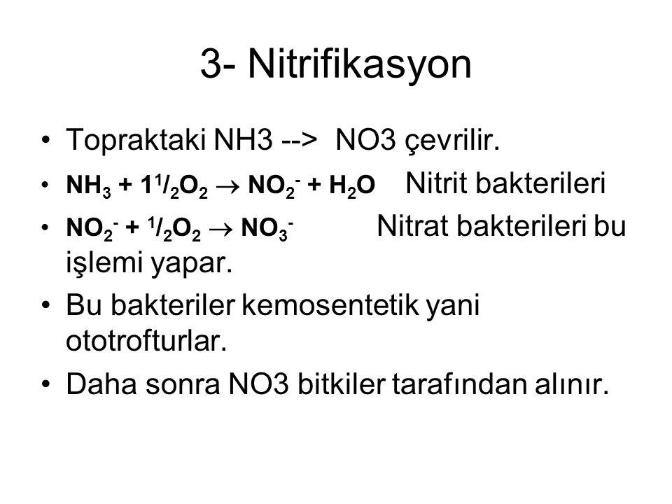3- Nitrifikasyon Topraktaki NH3 --> NO3 çevrilir. NH 3 + 1 1 / 2 O 2  NO 2 - + H 2 O Nitrit bakterileri NO 2 - + 1 / 2 O 2  NO 3 - Nitrat bakteriler