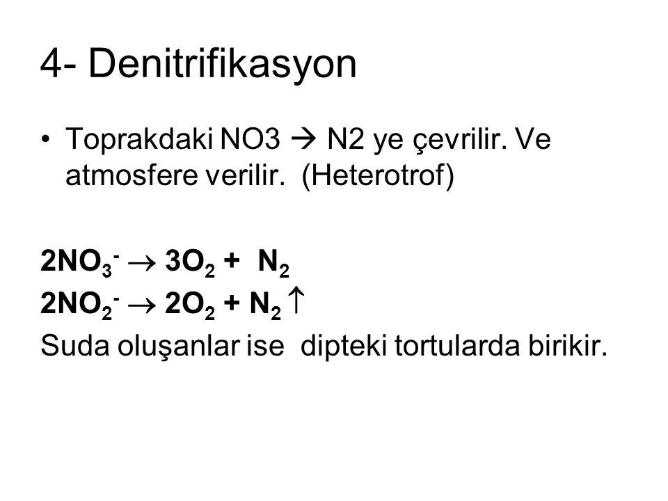 4- Denitrifikasyon Toprakdaki NO3  N2 ye çevrilir. Ve atmosfere verilir. (Heterotrof) 2NO 3 -  3O 2 + N 2 2NO 2 -  2O 2 + N 2  Suda oluşanlar ise