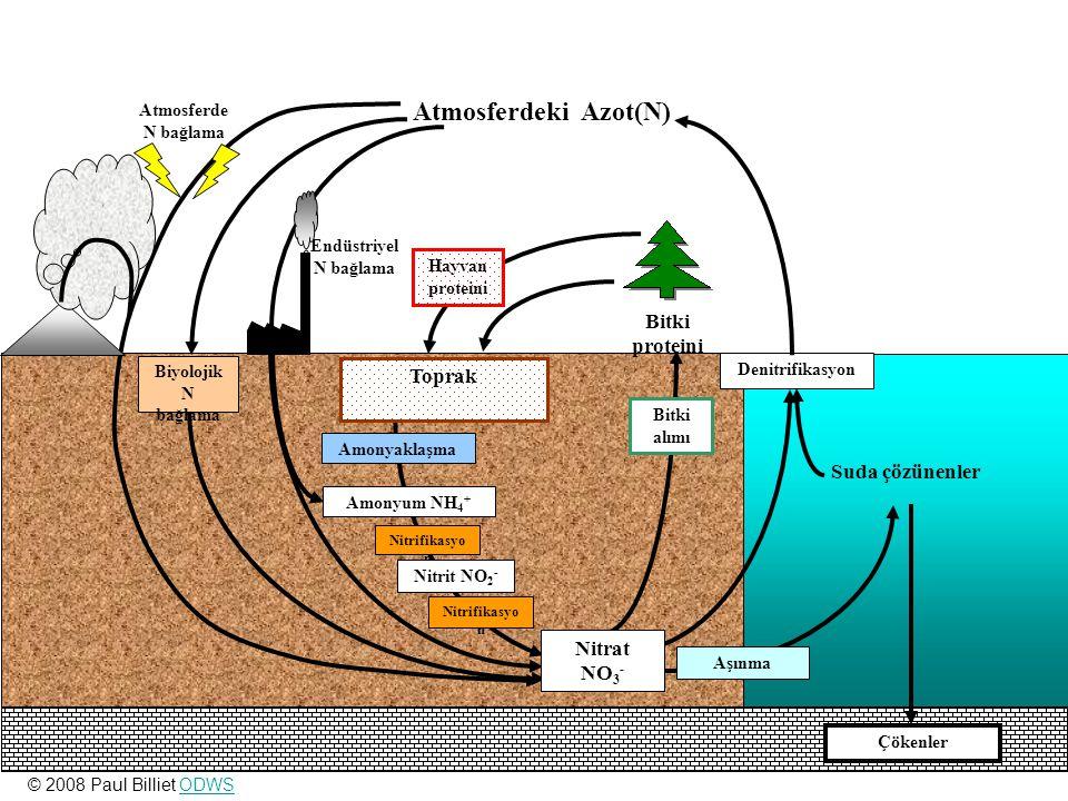 Çökenler Nitrifikasyo n Bitki alımı Biyolojik N bağlama Nitrifikasyo n Amonyum NH 4 + Amonyaklaşma Nitrit NO 2 - Suda çözünenler Denitrifikasyon Aşınm