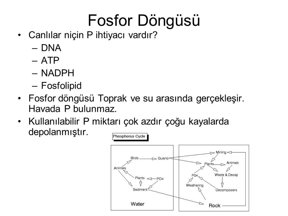 Canlılar niçin P ihtiyacı vardır? –DNA –ATP –NADPH –Fosfolipid Fosfor döngüsü Toprak ve su arasında gerçekleşir. Havada P bulunmaz. Kullanılabilir P m
