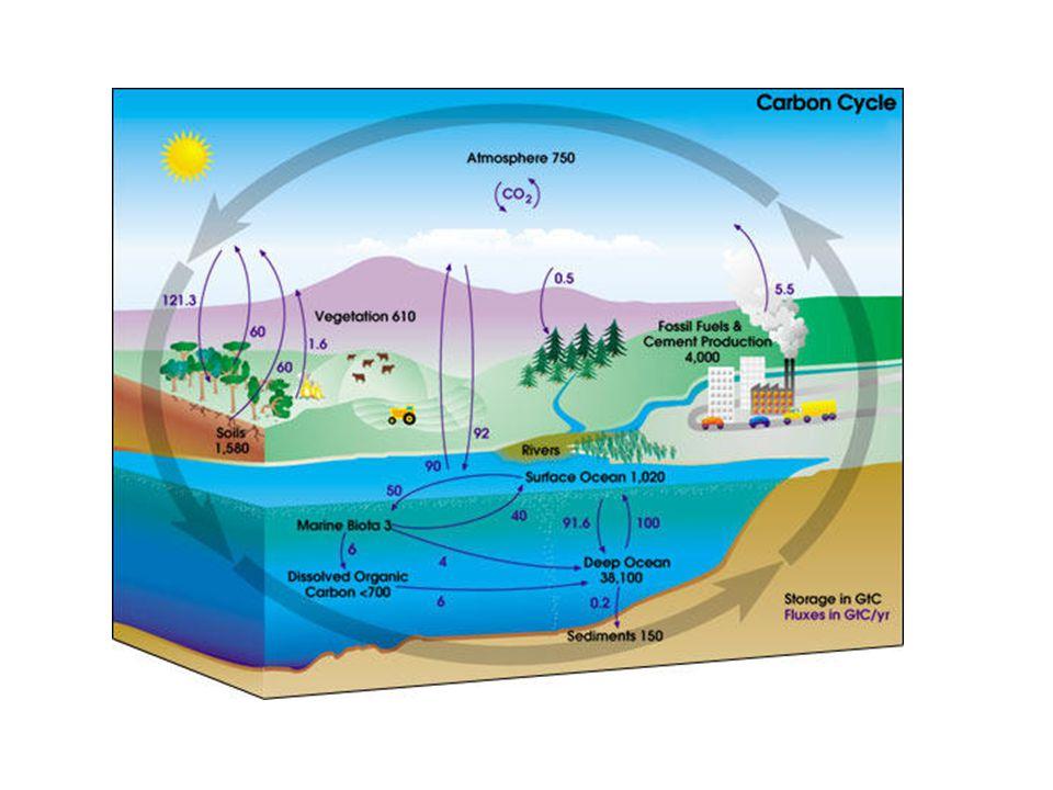 Karbon döngüsü ve sera etkisi arasındaki ilişki nedir? İnsanlar Karbon döngüsünü nasıl etkiler?