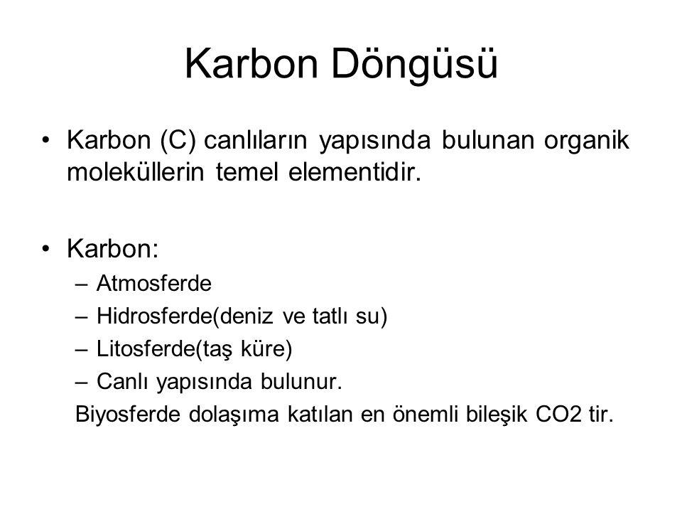 Karbon (C) canlıların yapısında bulunan organik moleküllerin temel elementidir. Karbon: –Atmosferde –Hidrosferde(deniz ve tatlı su) –Litosferde(taş kü