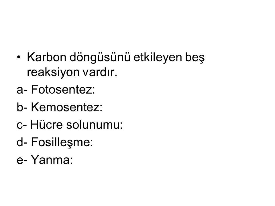 Karbon döngüsünü etkileyen beş reaksiyon vardır. a- Fotosentez: b- Kemosentez: c- Hücre solunumu: d- Fosilleşme: e- Yanma: