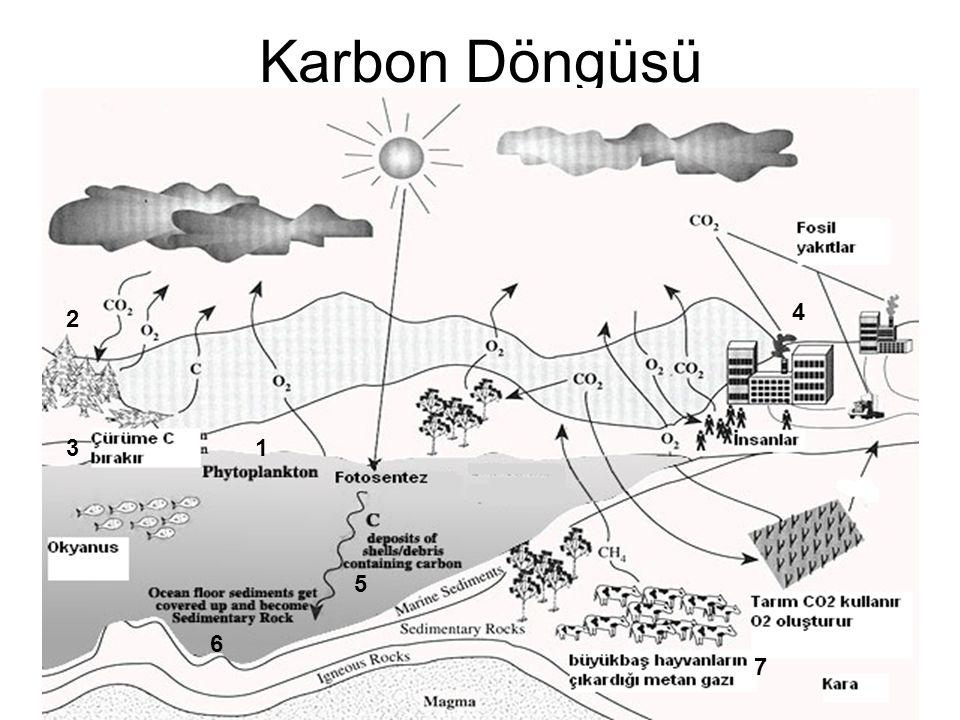 Karbon Döngüsü 1 2 3 4 5 6 7