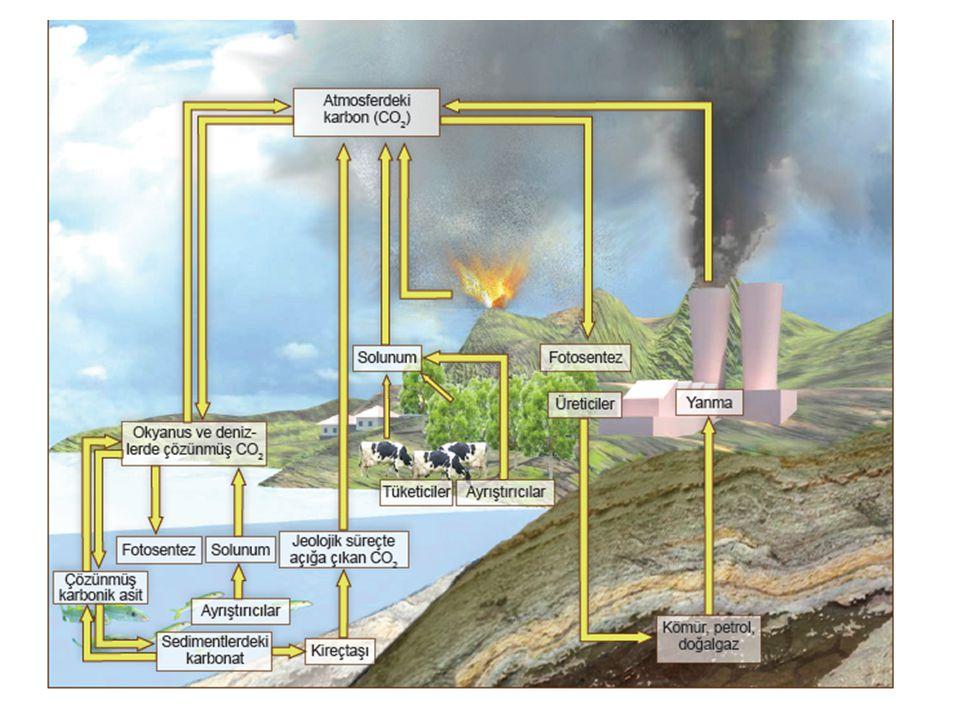 Karbon döngüsünde çeşitli dönüşümler 1.Sudaki fitoplanktonlar fotosentezle CO2 kullanır ve O2 bırakırlar, karada ise bitkiler fotosentez yaparlar ve Clu organik bileşikler sentezlerler.