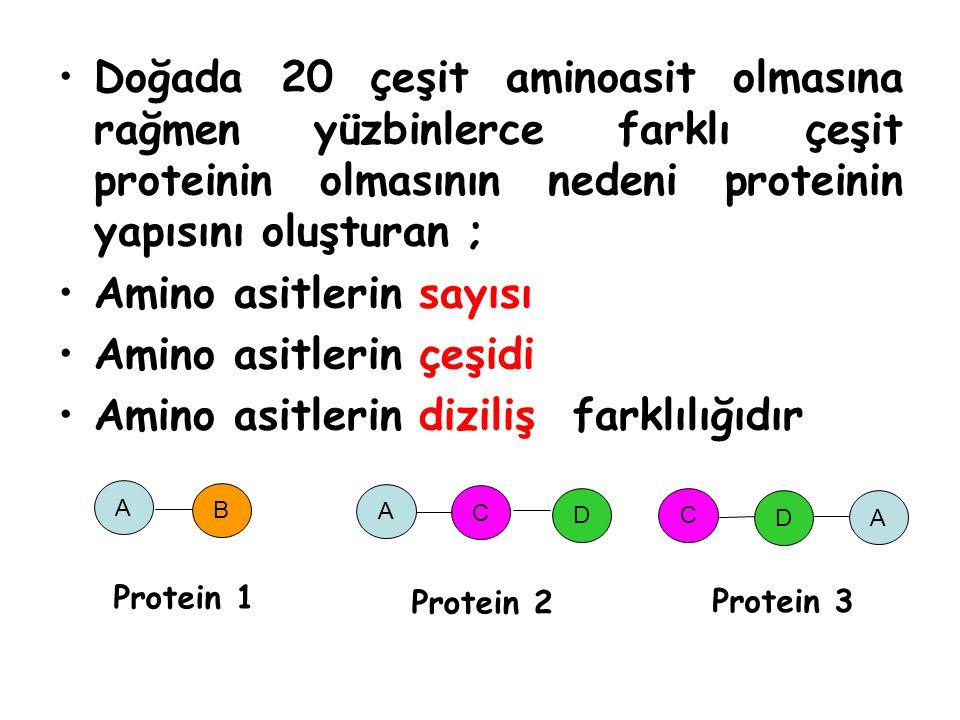 Doğada 20 çeşit aminoasit olmasına rağmen yüzbinlerce farklı çeşit proteinin olmasının nedeni proteinin yapısını oluşturan ; Amino asitlerin sayısı Amino asitlerin çeşidi Amino asitlerin diziliş farklılığıdır A B Protein 1 A C D A C D Protein 2 Protein 3