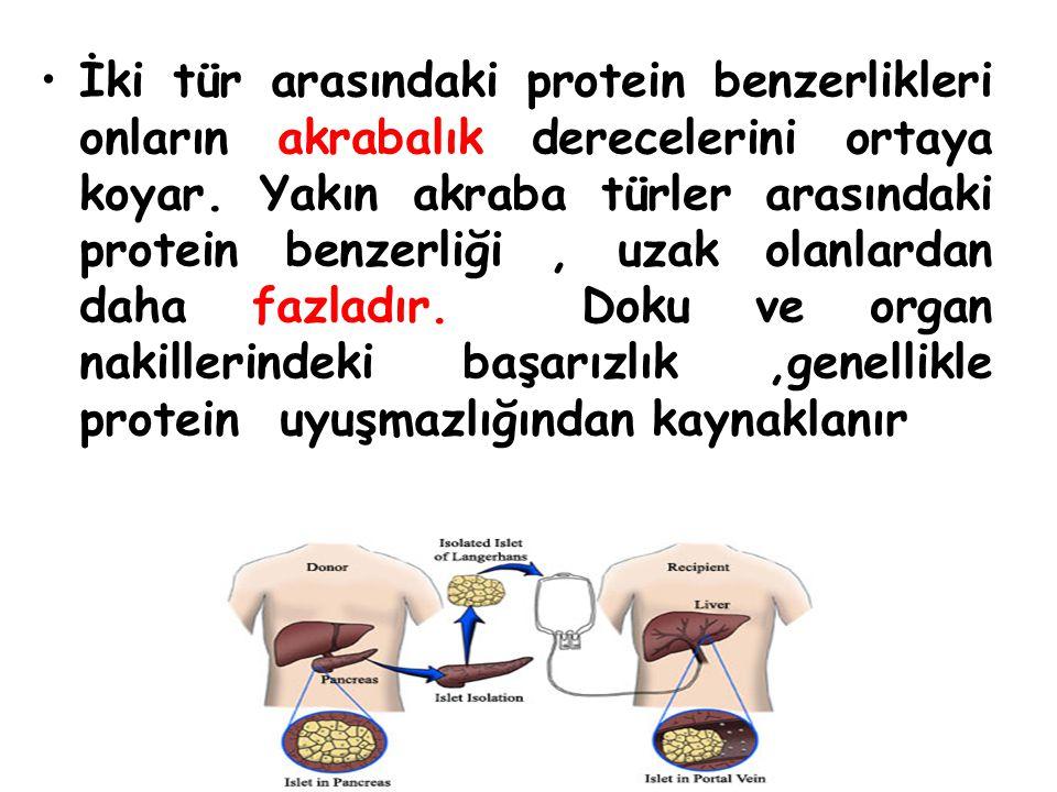 İki tür arasındaki protein benzerlikleri onların akrabalık derecelerini ortaya koyar.