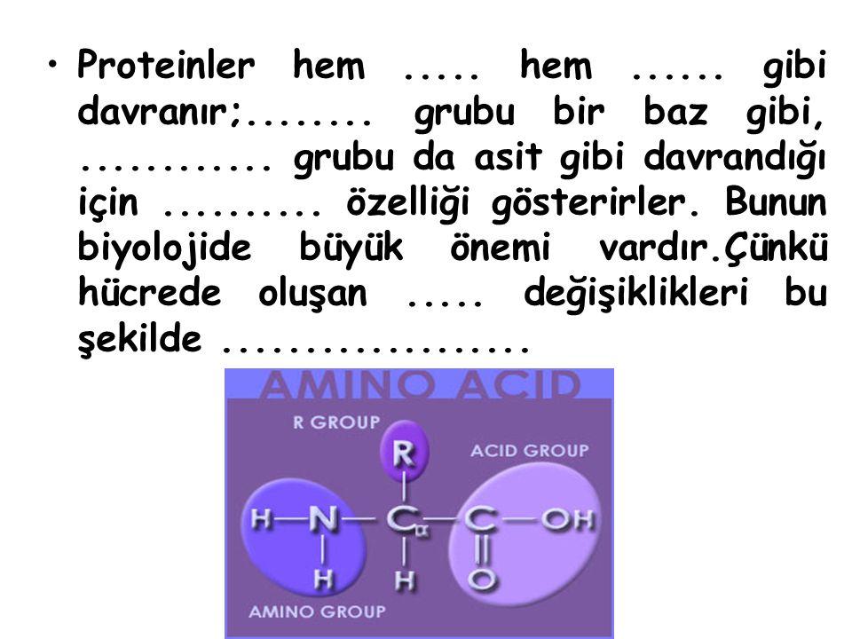 Proteinler hem.....hem...... gibi davranır;........