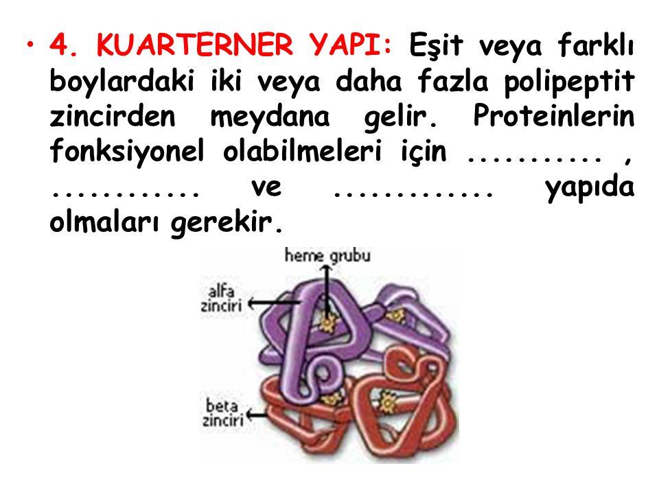 4. KUARTERNER YAPI: Eşit veya farklı boylardaki iki veya daha fazla polipeptit zincirden meydana gelir. Proteinlerin fonksiyonel olabilmeleri için....