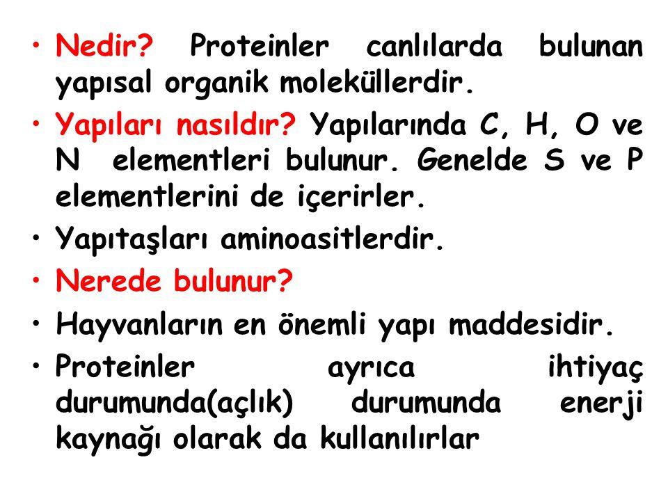 Nedir.Proteinler canlılarda bulunan yapısal organik moleküllerdir.
