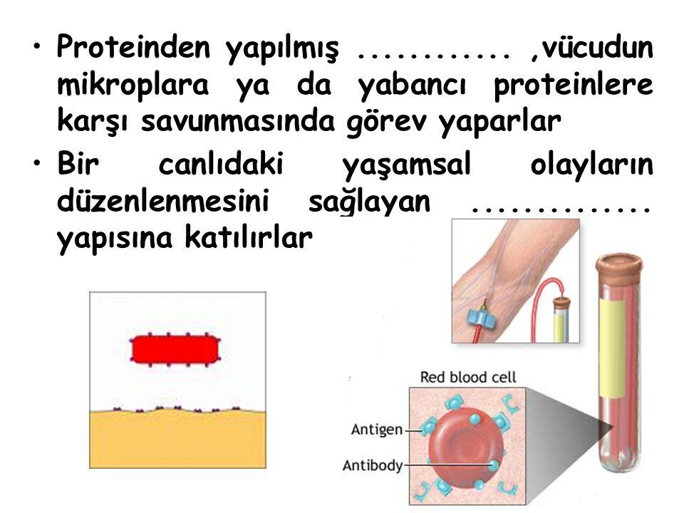 Proteinden yapılmış............,vücudun mikroplara ya da yabancı proteinlere karşı savunmasında görev yaparlar Bir canlıdaki yaşamsal olayların düzenlenmesini sağlayan..............