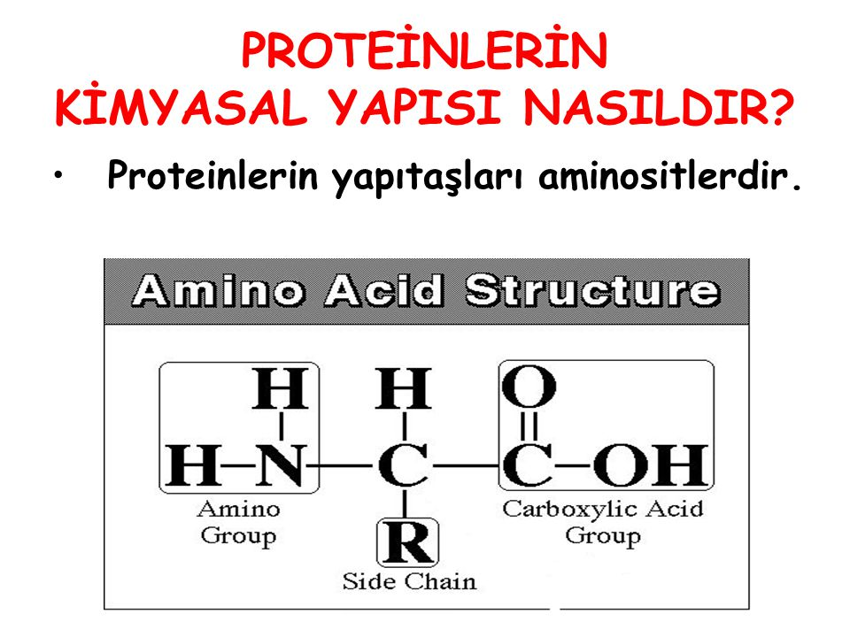 PROTEİNLERİN KİMYASAL YAPISI NASILDIR? Proteinlerin yapıtaşları aminositlerdir.