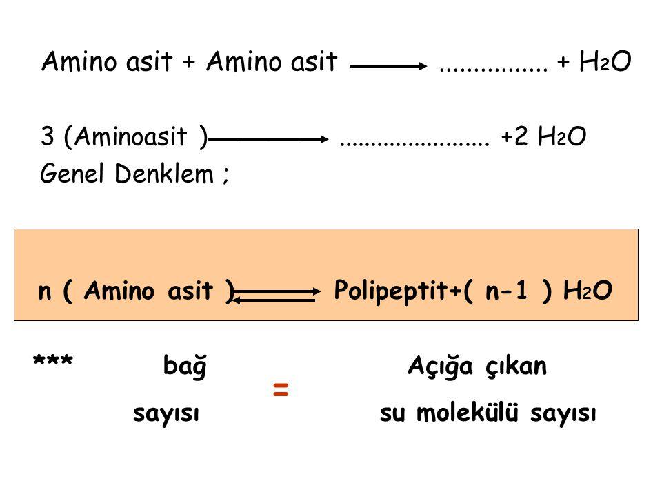 Amino asit + Amino asit................+ H 2 O 3 (Aminoasit )........................