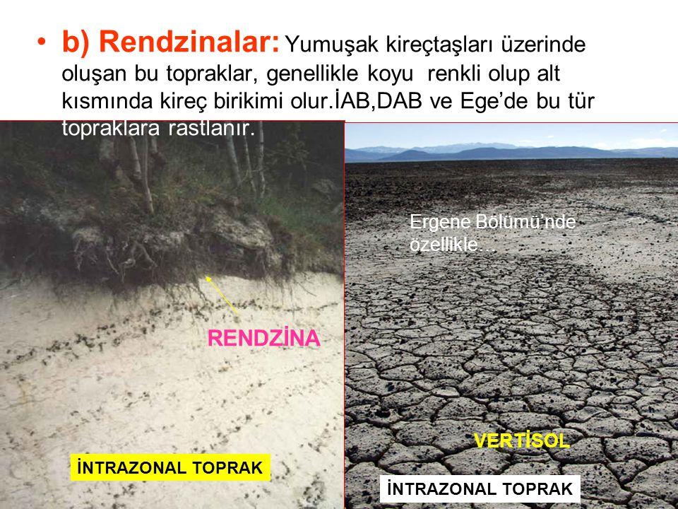 b) Rendzinalar: Yumuşak kireçtaşları üzerinde oluşan bu topraklar, genellikle koyu renkli olup alt kısmında kireç birikimi olur.İAB,DAB ve Ege'de bu t