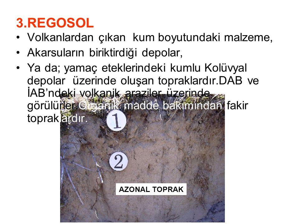 3.REGOSOL Volkanlardan çıkan kum boyutundaki malzeme, Akarsuların biriktirdiği depolar, Ya da; yamaç eteklerindeki kumlu Kolüvyal depolar üzerinde olu