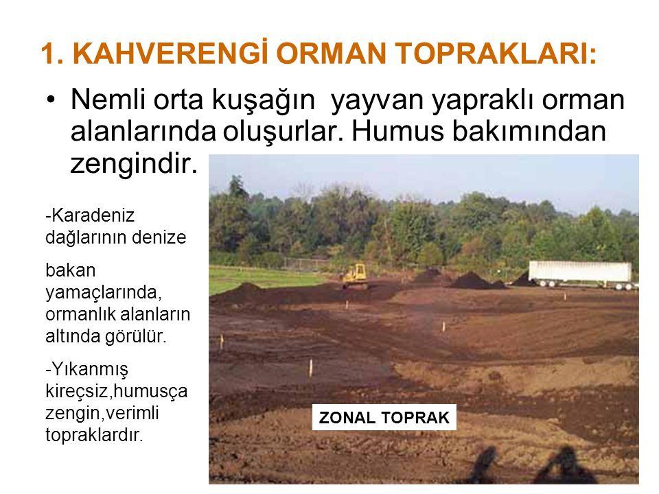 1. KAHVERENGİ ORMAN TOPRAKLARI: Nemli orta kuşağın yayvan yapraklı orman alanlarında oluşurlar. Humus bakımından zengindir. ZONAL TOPRAK -Karadeniz da