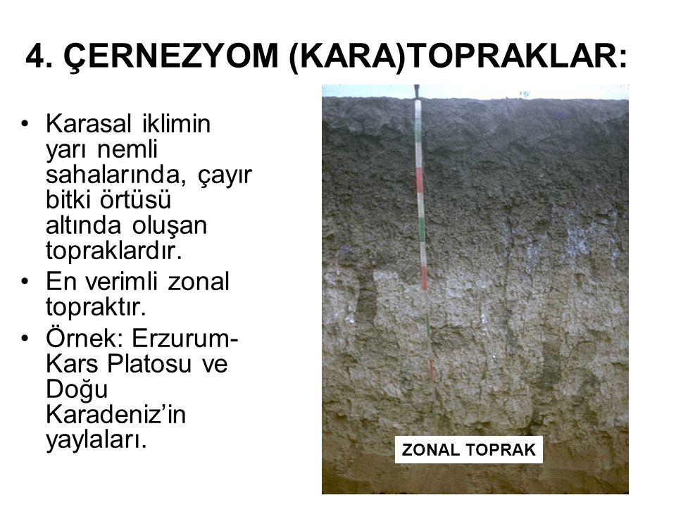 4. ÇERNEZYOM (KARA)TOPRAKLAR: Karasal iklimin yarı nemli sahalarında, çayır bitki örtüsü altında oluşan topraklardır. En verimli zonal topraktır. Örne