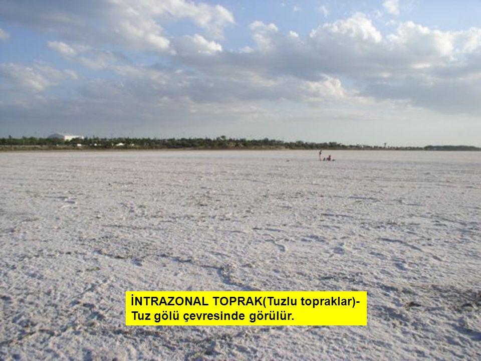 İNTRAZONAL TOPRAK(Tuzlu topraklar)- Tuz gölü çevresinde görülür.