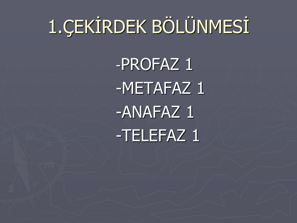 1.ÇEKİRDEK BÖLÜNMESİ - PROFAZ 1 - PROFAZ 1 -METAFAZ 1 -METAFAZ 1 -ANAFAZ 1 -ANAFAZ 1 -TELEFAZ 1 -TELEFAZ 1