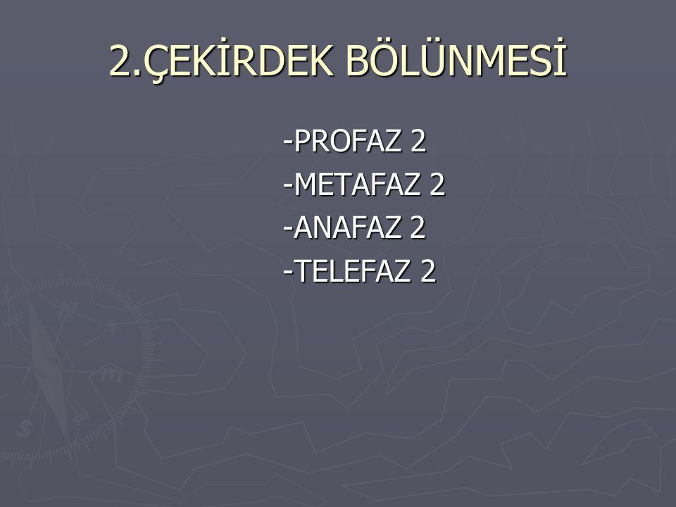 2.ÇEKİRDEK BÖLÜNMESİ -PROFAZ 2 -PROFAZ 2 -METAFAZ 2 -METAFAZ 2 -ANAFAZ 2 -ANAFAZ 2 -TELEFAZ 2 -TELEFAZ 2