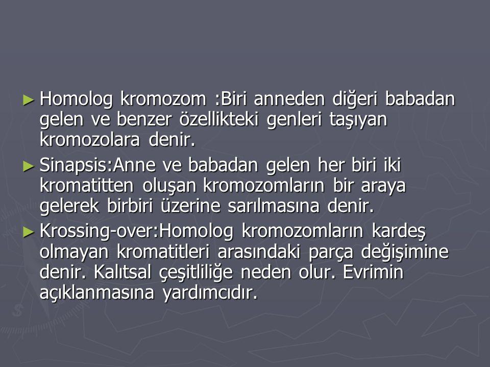 ► Homolog kromozom :Biri anneden diğeri babadan gelen ve benzer özellikteki genleri taşıyan kromozolara denir. ► Sinapsis:Anne ve babadan gelen her bi