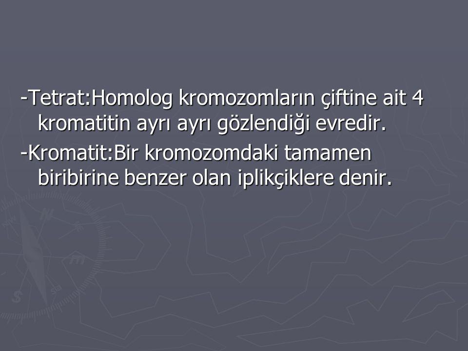-Tetrat:Homolog kromozomların çiftine ait 4 kromatitin ayrı ayrı gözlendiği evredir. -Kromatit:Bir kromozomdaki tamamen biribirine benzer olan iplikçi