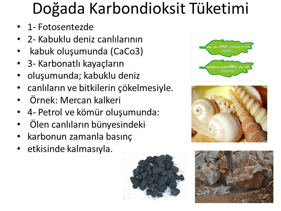 Doğada Karbondioksit Tüketimi 1- Fotosentezde 2- Kabuklu deniz canlılarının kabuk oluşumunda (CaCo3) 3- Karbonatlı kayaçların oluşumunda; kabuklu deniz canlıların ve bitkilerin çökelmesiyle.