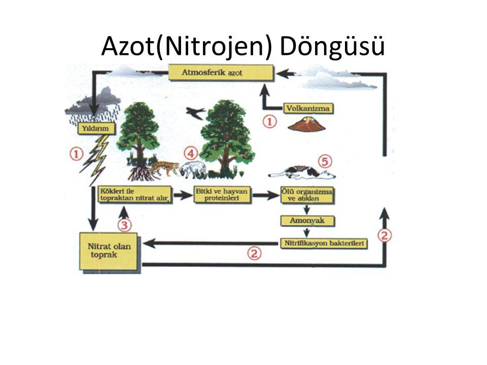 Azot(Nitrojen) Döngüsü