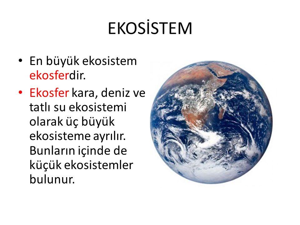 EKOSİSTEM En büyük ekosistem ekosferdir. Ekosfer kara, deniz ve tatlı su ekosistemi olarak üç büyük ekosisteme ayrılır. Bunların içinde de küçük ekosi
