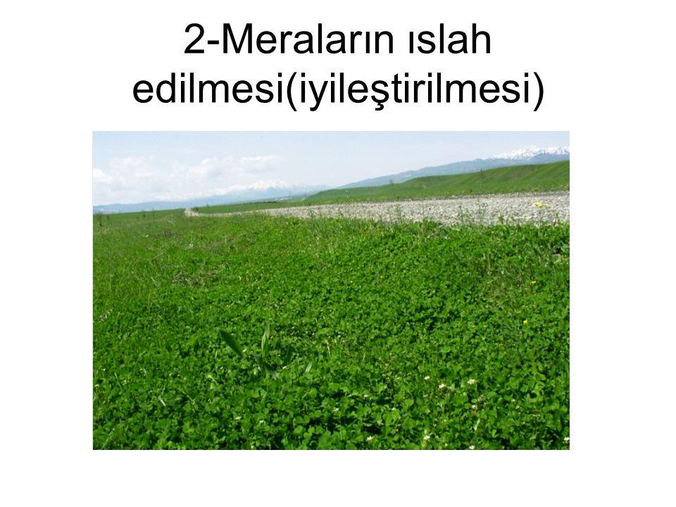 2-Meraların ıslah edilmesi(iyileştirilmesi)