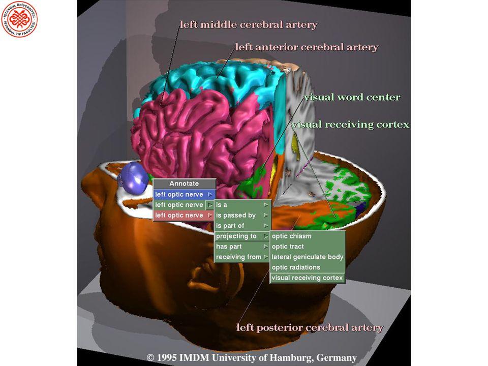 Transkranyal Manyetik Stimülasyon (TMS) Nöronal aktivitede kısa bir süreyle lezyon benzeri bir kesinti yaratmak üzere bir manyetik darbe gönderir.