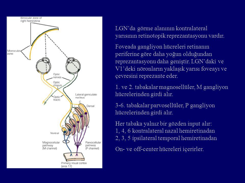 LGN'da görme alanının kontralateral yarısının retinotopik reprezantasyonu vardır. Foveada gangliyon hücreleri retinanın periferine göre daha yoğun old