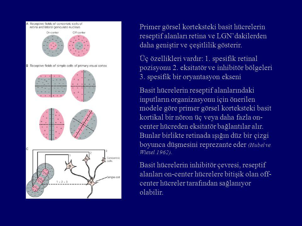 Primer görsel korteksteki basit hücrelerin reseptif alanları retina ve LGN'dakilerden daha geniştir ve çeşitlilik gösterir. Üç özellikleri vardır: 1.