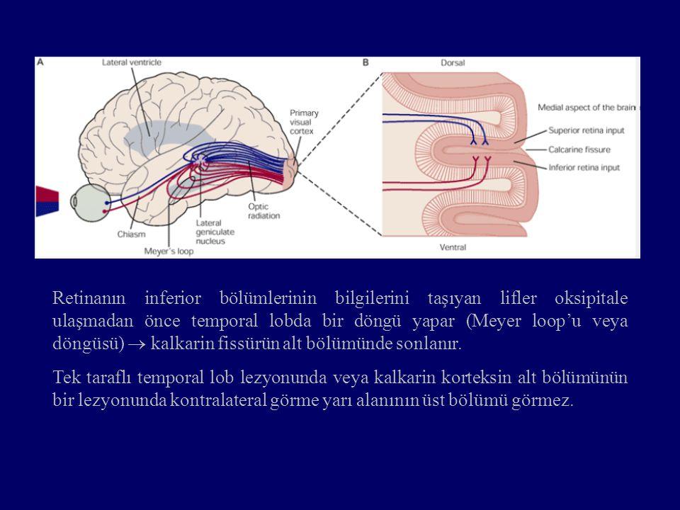 Retinanın inferior bölümlerinin bilgilerini taşıyan lifler oksipitale ulaşmadan önce temporal lobda bir döngü yapar (Meyer loop'u veya döngüsü)  kalk