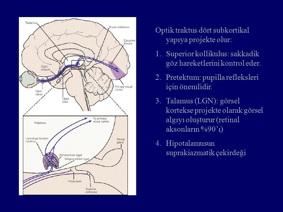 Optik traktus dört subkortikal yapıya projekte olur: 1.Superior kollikulus: sakkadik göz hareketlerini kontrol eder. 2.Pretektum: pupilla refleksleri