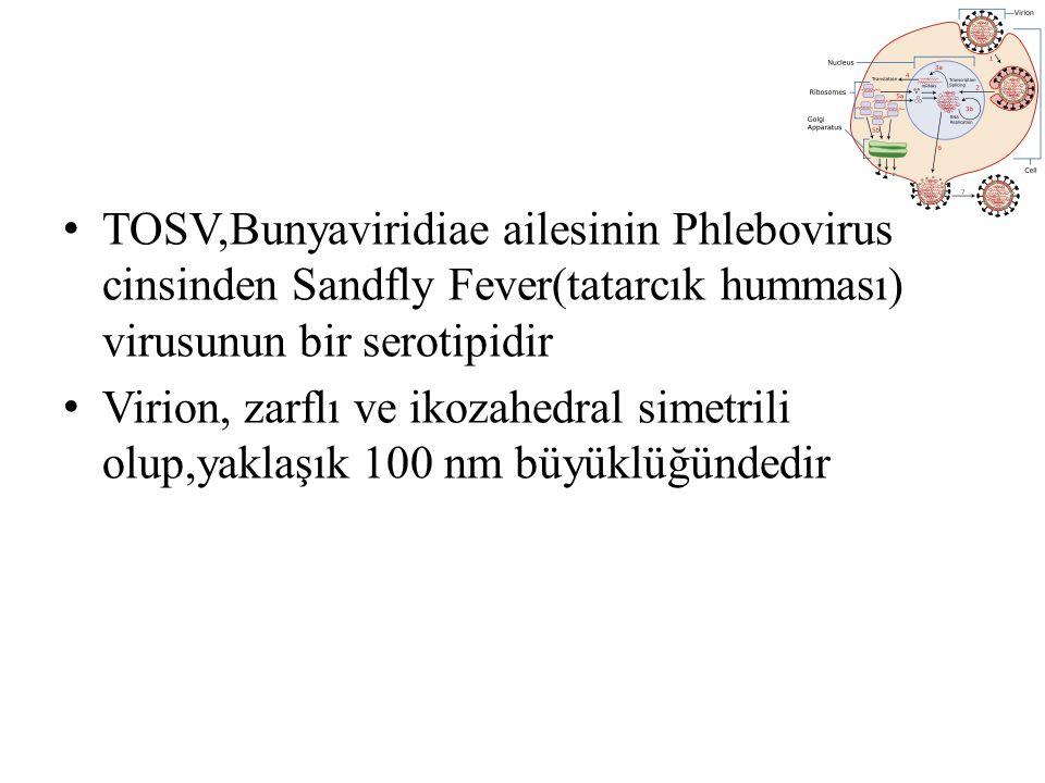 TOSV A genotipi İtalya, Fransa, Portekiz ve son yıllarda Türkiye de saptanmış, TOSV B genotipi ise İspanya, Fransa ve Portekiz den bildirilmiştir Genotip yayılımındaki coğrafi farkların, vektör türlerindeki farklılıklardan kaynaklandığı düşünülmektedir