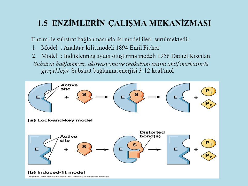1.5 ENZİMLERİN ÇALIŞMA MEKANİZMASI Enzim ile substrat bağlanmasında iki model ileri sürülmektedir. 1.Model : Anahtar-kilit modeli 1894 Emil Ficher 2.M