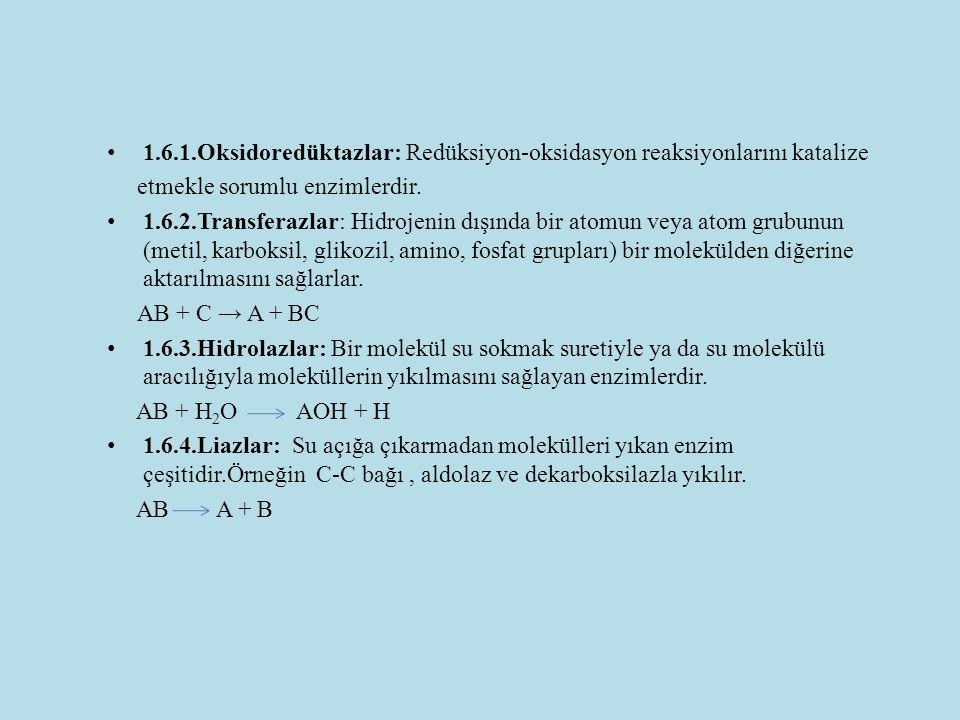 1.6.1.Oksidoredüktazlar: Redüksiyon-oksidasyon reaksiyonlarını katalize etmekle sorumlu enzimlerdir. 1.6.2.Transferazlar: Hidrojenin dışında bir atomu