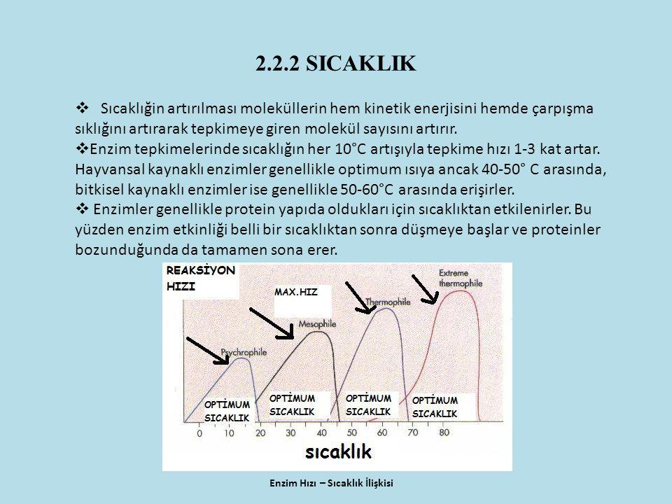 2.2.2 SICAKLIK Enzim Hızı – Sıcaklık İlişkisi  Sıcaklığin artırılması moleküllerin hem kinetik enerjisini hemde çarpışma sıklığını artırarak tepkimeye giren molekül sayısını artırır.