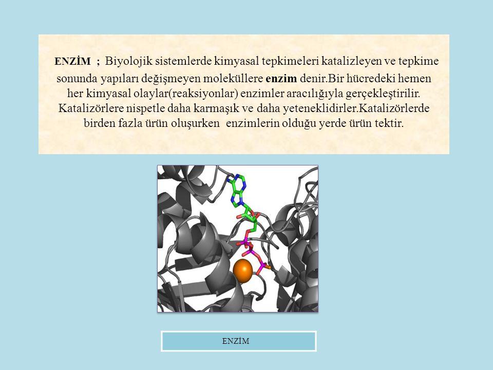 ENZİM ; Biyolojik sistemlerde kimyasal tepkimeleri katalizleyen ve tepkime sonunda yapıları değişmeyen moleküllere enzim denir.Bir hücredeki hemen her kimyasal olaylar(reaksiyonlar) enzimler aracılığıyla gerçekleştirilir.