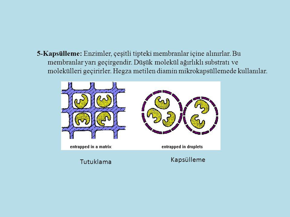 5-Kapsülleme: Enzimler, çeşitli tipteki membranlar içine alınırlar. Bu membranlar yarı geçirgendir. Düşük molekül ağırlıklı substratı ve molekülleri g