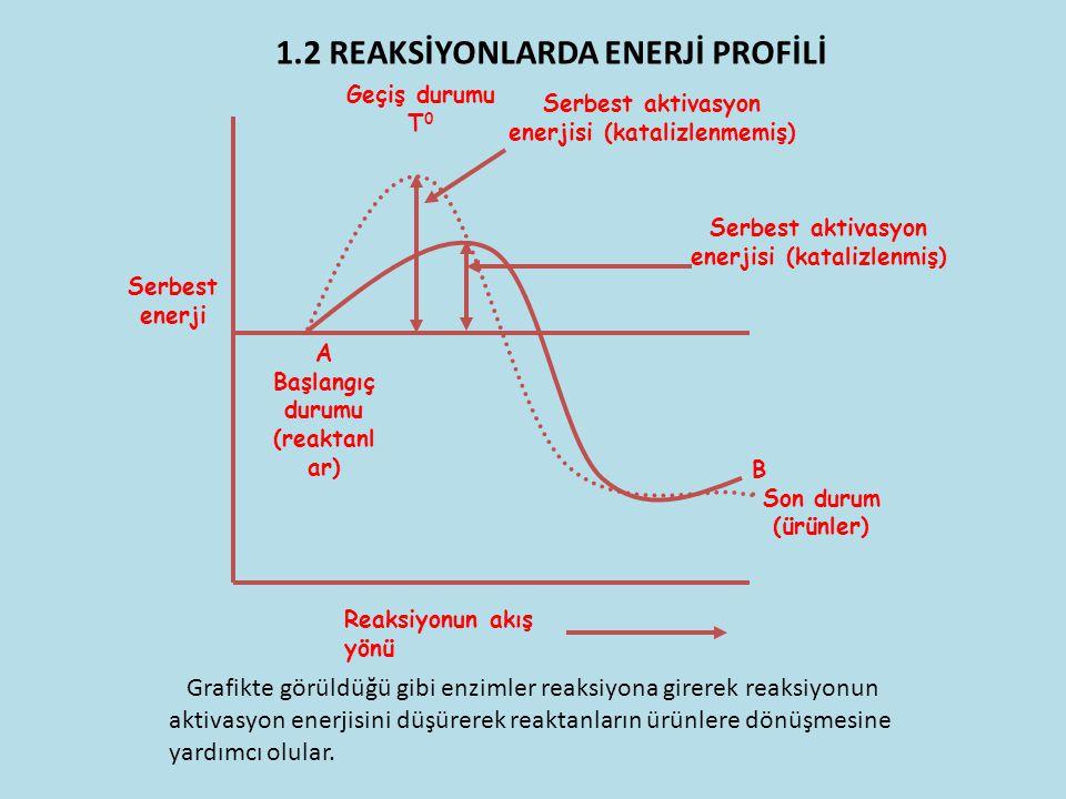 A Başlangıç durumu (reaktanl ar) B Son durum (ürünler) Reaksiyonun akış yönü Serbest enerji Geçiş durumu T 0 Serbest aktivasyon enerjisi (katalizlenme