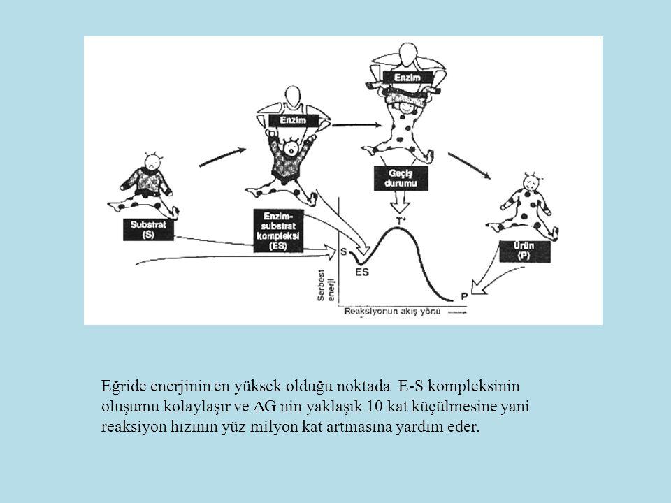 MİCHAELİS –MENTEN EŞİTLİĞİ Belirli bir andaki kataliz hızı: V i = Vmax [S] [S] + K M Km Michaelis Menten sabitidir.