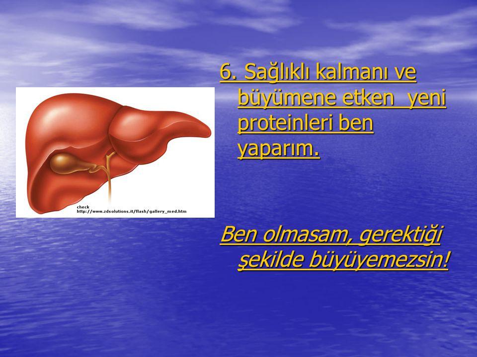 6. Sağlıklı kalmanı ve büyümene etken yeni proteinleri ben yaparım.