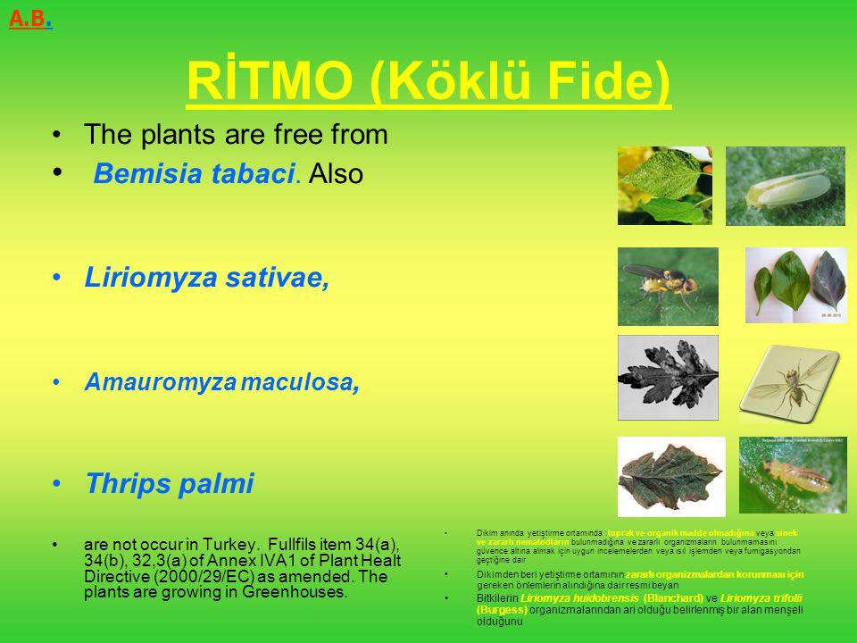 RİTMO (Köklü Fide) The plants are free from Bemisia tabaci. Also Liriomyza sativae, Amauromyza maculosa, Thrips palmi are not occur in Turkey. Fullfil