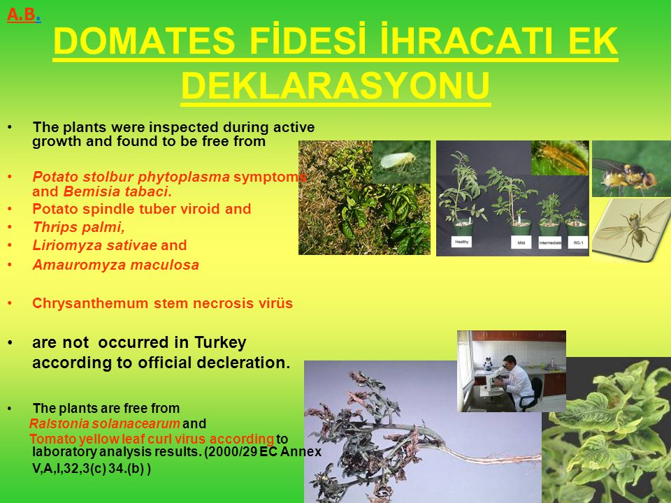 DOMATES FİDESİ İHRACATI EK DEKLARASYONU The plants were inspected during active growth and found to be free from Potato stolbur phytoplasma symptoms a