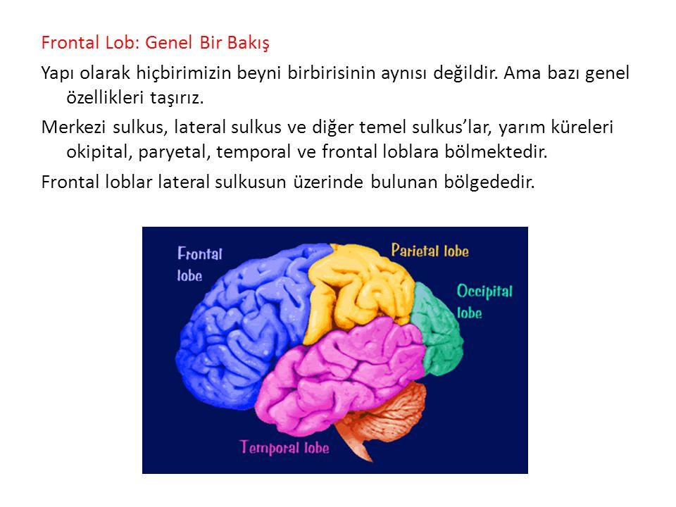 Shallice ayrıca iki tane daha frontal lob fonksiyonu testi geliştirmiş.