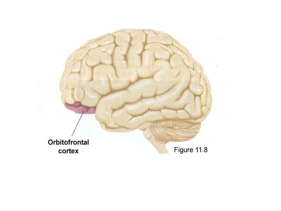 Diğer loblarla karşılaştırıldığında frontal loblar psikolojik olarak daha karmaşık görevlere sahiptir.