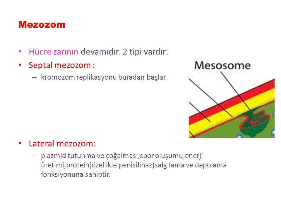 Periplazmik aralık Dış zar ile hücre zarı arasındaki boşluğa periplazmik aralık denir. Bu aralıkta betalaktamazlar,aminoglikozid modifiye edici enziml